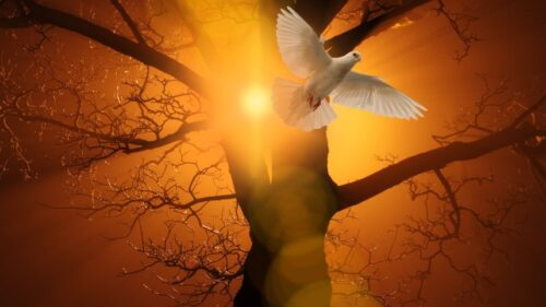 PAPA FRANJO Tko je i što nam govori Duh Sveti?